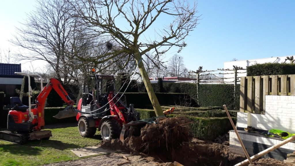 Voorbereiding verplanten m.b.v. mini-graver