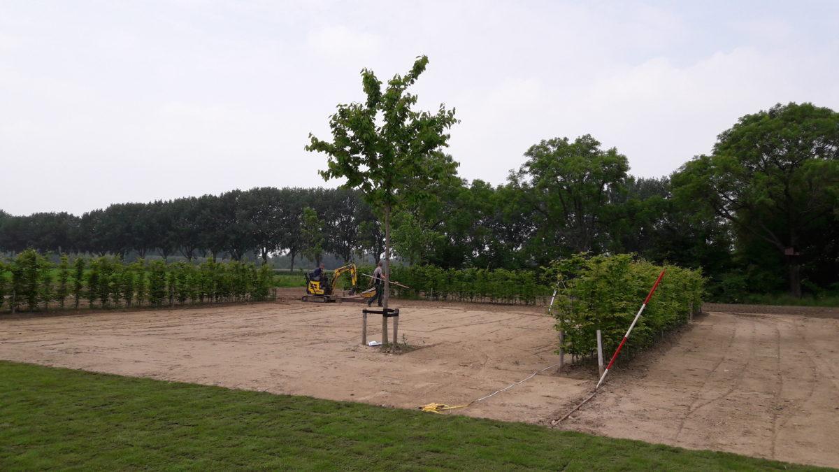 Planten En Bomen : Leveren van bomen en planten van voorthuizen boom en