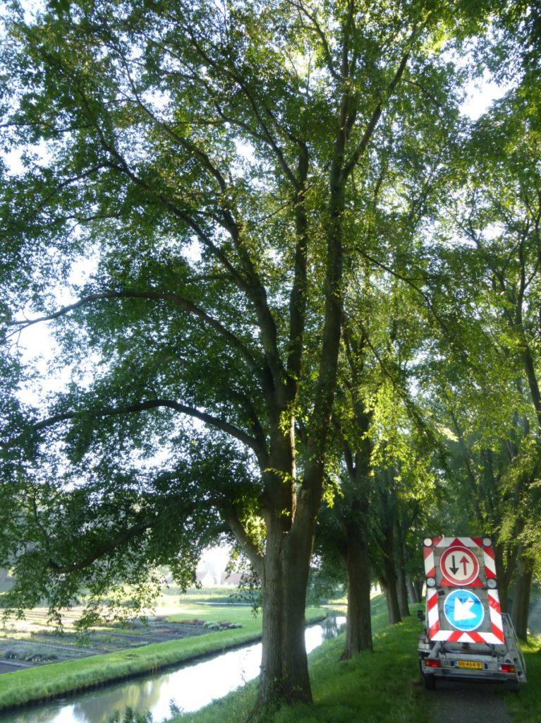 Controle kroonverankeringen in Iepen gemeente Enkhuizen