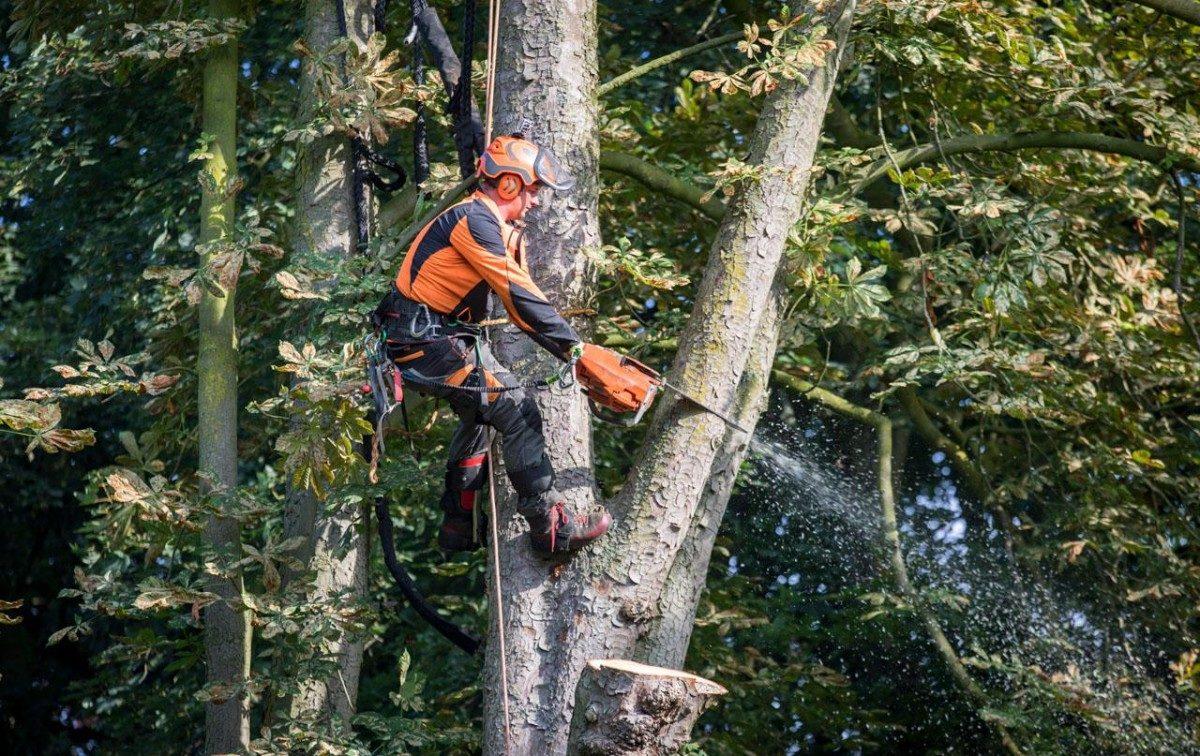 Een boom verwijderen